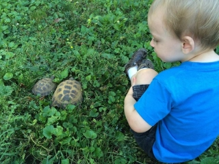 Benjamin with our Russian tortoises, Wedge & Vicks